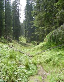 Bild des Bödmerenwald